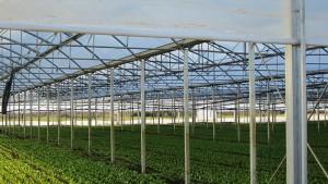 impianto-di-biometano-in-campania (1)